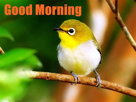 good morning wishes with birds pictures images page 18