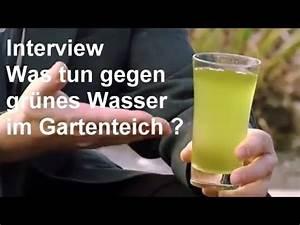 Grünes Wasser Im Gartenteich Hausmittel : gr nes wasser im gartenteich hintergrundwissen zum thema gr ner gartenteich video youtube ~ Watch28wear.com Haus und Dekorationen