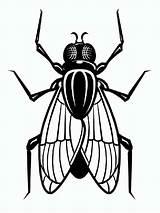 Fly Coloring Printable Fliege Ausmalbilder Animals Malvorlagen Ausdrucken Kostenlos sketch template