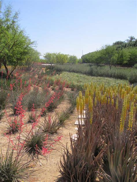 mass planting sunnylands a study in desert mass planting crasstalk