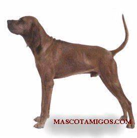 Dogs Coonhound
