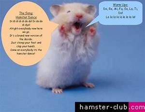 Hamster Dance Lyrics Auto Design Tech