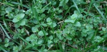 different types of kitchen faucets how to weeds in your lawn today 39 s homeowner