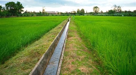 บ้านเมือง - จัดรูปส่งเสริมเกษตรแปลงใหญ่ 3 จังหวัดใต้
