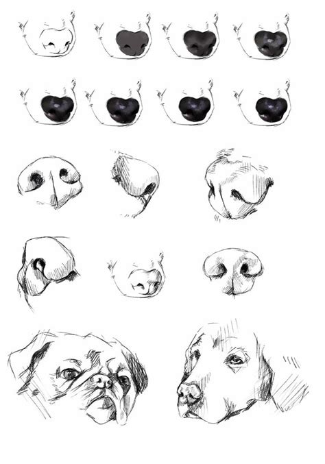 dogs nose reference tutorial  ryky art tutorials