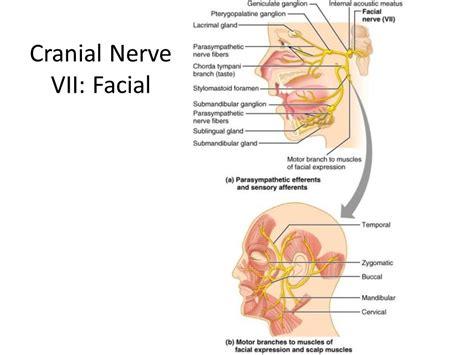 cranial nerve v trigeminal ppt