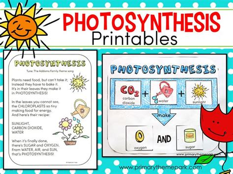 photosynthesis for science ideas