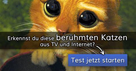 erkennst du diese beruehmten katzen aus tv und internet