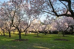 Sitios para disfrutar de las flores en Madrid Viveros Don Pedro