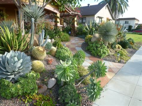 landscaping with cactus cactus landscape ideas native home garden design