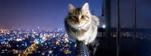 cat city cat on a ledge with city view timeline