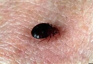 Maryland bedbug lawsuit faika shaaban awarded 800000 in for Bed bug litigation