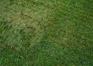 Wie Pflege Ich Meinen Rasen Im Frühjahr : rasenpflege worauf kommt es an ~ Lizthompson.info Haus und Dekorationen