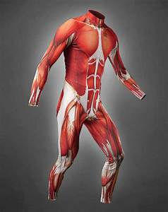 Anatomical Biker Attire   Muscle Skin Cycling Suit