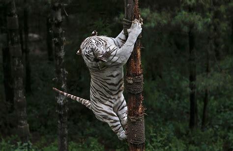 wildlife photography     speechless