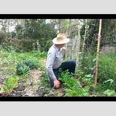 How To Grow Bush Beans And Climbing Beans Youtube