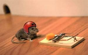 The Different Types Of Mouse Traps Explained