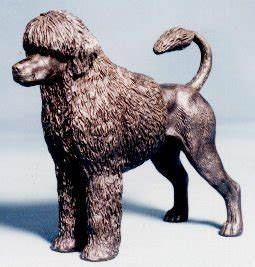 Lion Cut Portuguese Water Dog