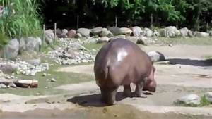 Le Plus Gros Moteur Du Monde : le plus gros pet du monde l 39 hippopotame youtube ~ Medecine-chirurgie-esthetiques.com Avis de Voitures