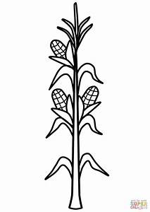 Free Corn Field Coloring Pages Sketch Coloring Page