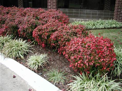 low maintenance shrubs the 25 best low maintenance shrubs ideas on pinterest yard landscaping yard and front yard