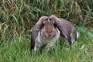 Widder Und Widder : kaninchen kaufen unsere tipps ~ Orissabook.com Haus und Dekorationen