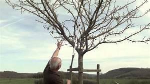 Baum Fällen Kosten Forum : kirschbaum richtig schneiden kirschbaum schneiden so ~ Jslefanu.com Haus und Dekorationen