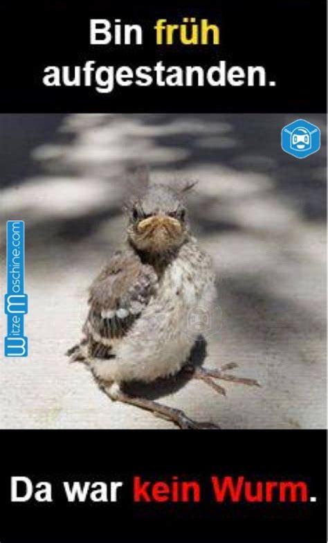 der fruehe vogel faengt den wurm im echten leben lustige