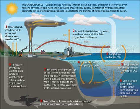 Define Carbon Sink Geography by Ib The Carbon Cycle Geography