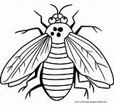 Coloring Pages Fly Bugs Printable Bug Sheet Sheets Animal Flies Insects Animals Printables Cartoon Guy Getcoloringpages Letscolorit sketch template