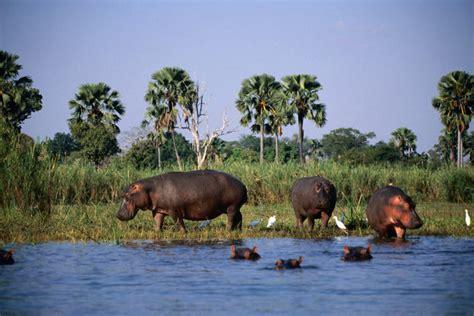 malawi wildlife lake