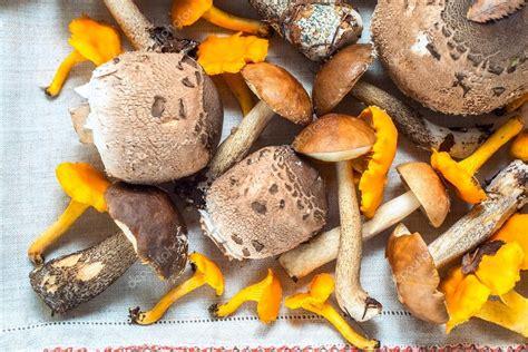 diferentes de cogumelos comest 237 veis cogumelo da floresta