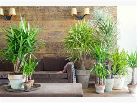 Grünpflanzen Fürs Zimmer
