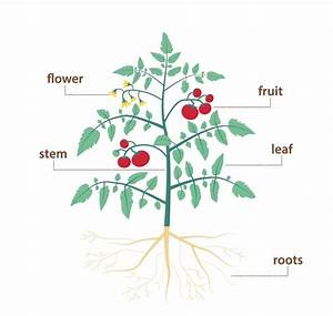 Parts Of A Plant And Their Functions  With Diagram  In