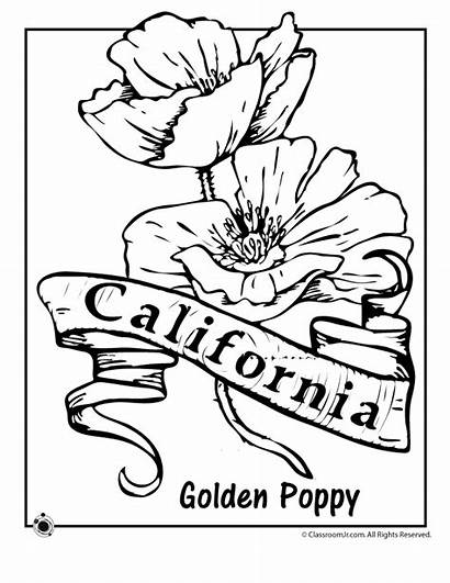Coloring California State Flower Pages Clipart Oregon