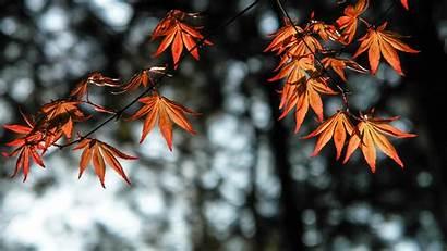 4k Leaves Autumn Orange Wallpapers 1080p Laptop