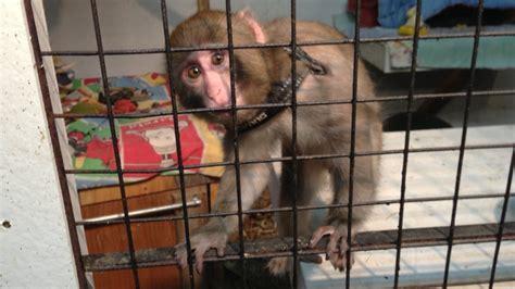 Ikea Monkey Transferred