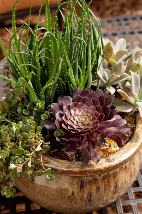 planting succulents in containers 111 best images about garden sedum succulants on 4262