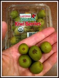 Kitchen Container by What The Kiwi Berries Food Just Sayin