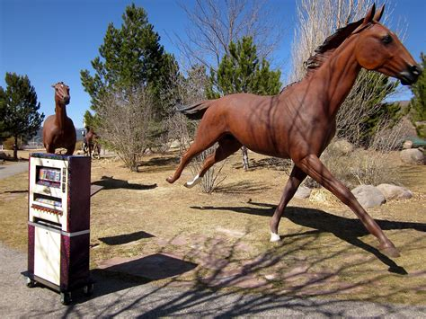 ruidoso horses downs mexico mat wild beauty nm epic trip road amazed grace largest keep