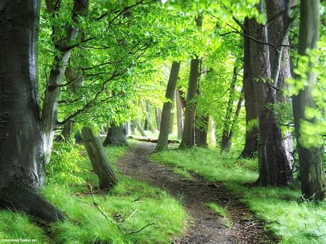 Free Green Forest Background by 73 Forest Green Background On Wallpapersafari
