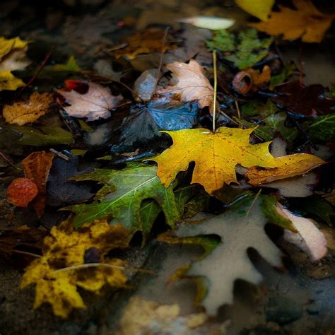 Autumn Leaves in Water 001 | Autumn leaves, Autumn, Painting