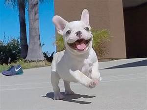 'Isabella', our beautiful female French Bulldog puppy for ...