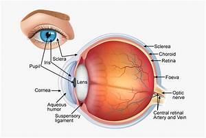 30 Label The Eye Diagram