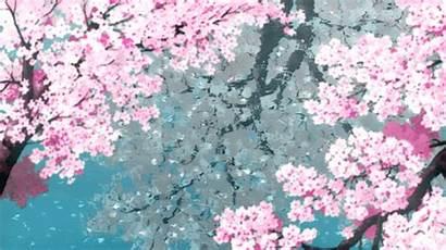 Cherry Blossoms Blossom Fondos Anime Movimiento Gifs