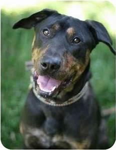 Moose | Adopted Dog | Valley Village, CA | Rottweiler ...