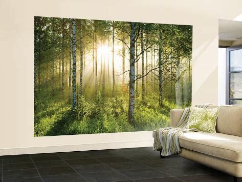 forest scene wallpaper mural wallpaper mural allposters