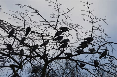 birds in a tree free stock photo public domain pictures