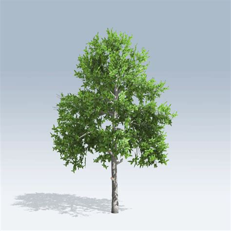 black gum tree black gum v6 speedtree