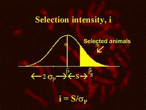 Selection Intensity  I